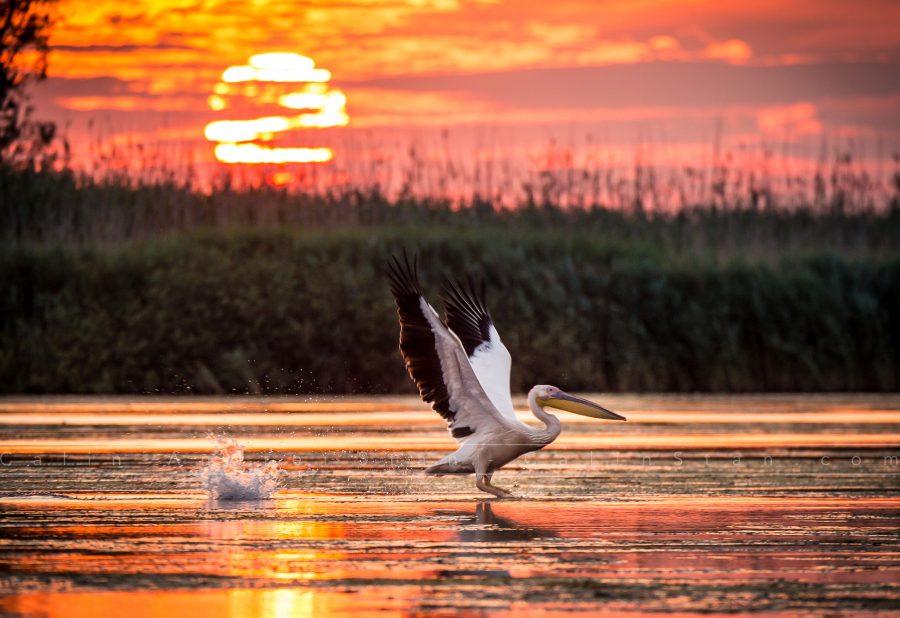 Delta Dunarii Fotografie de Peisaj