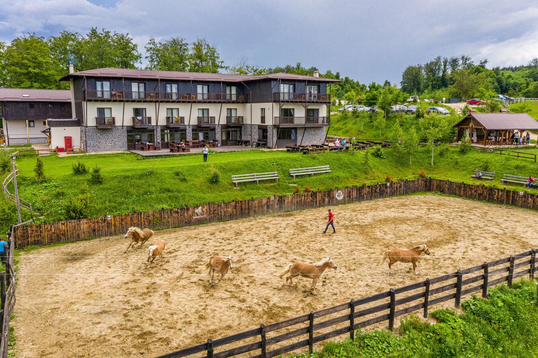Caii in manej la Potcoava